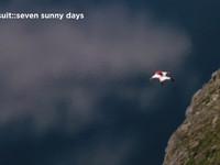 Wingsuit Segment from