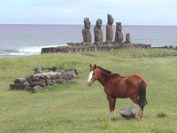 National Geographic:  Wild Chronicles Version:  Caballo Loco on Easter Island