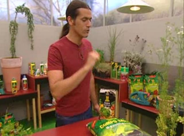Bricoman a jardiner a cultivo del cilantro en casa on vimeo - Jardineria en casa ...