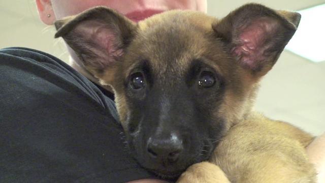 Military Working Dog Puppy Program