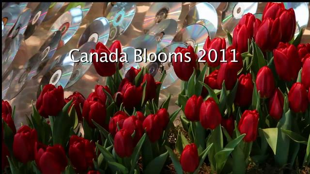 Canada Blooms 2011 Feature Garden Award Winners