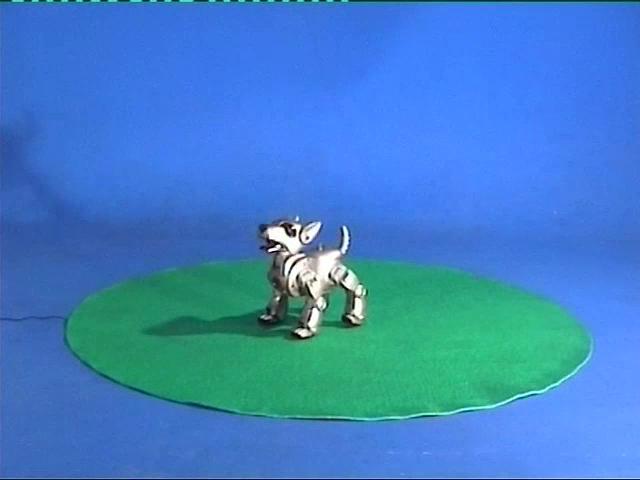 Video Doglab