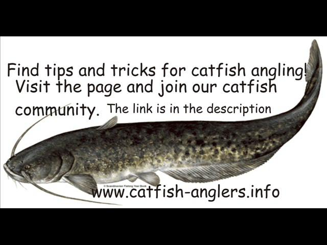 Catfish fishing tips and tricks on vimeo for Fishing tips and tricks