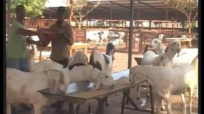 Al Fahad Goat Farm http://vimeo.com/user6731051/videos