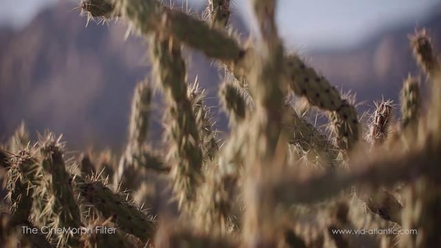 Desert Light (CineMorph NAB)