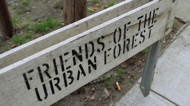 Friends of the Urban Forest - A Documentary on Cigarette Litter