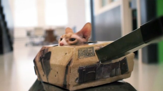 Cats in Tanks