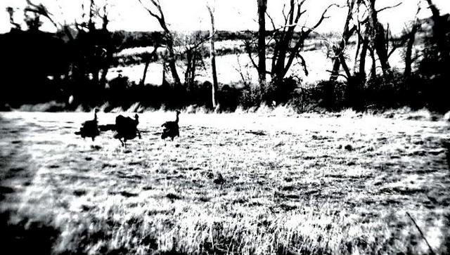 Episode 5 Turkey hunting with Clayton Edgar