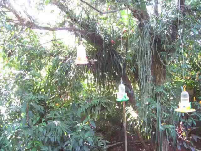 El jard n de los picaflores on vimeo for Bazzel el jardin de los secretos