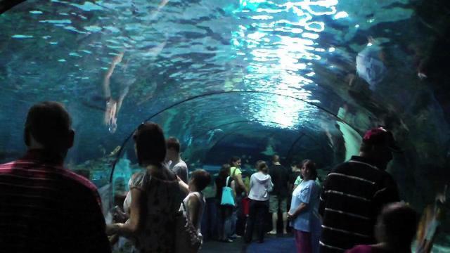Sharks At Ripley 39 S Aquarium In Myrtle Beach On Vimeo