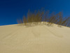 The Million Tree Project II: Desertification