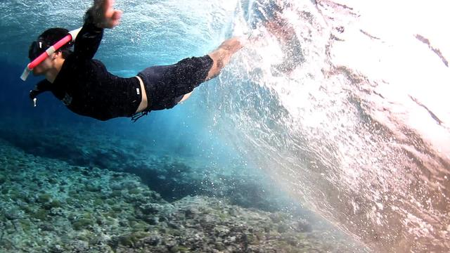 Free diving French Polynesia | Pelagic Life