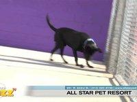 video:My Local Buzz TV (Torrance) - All Star Pet Resort