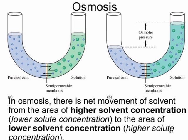 Osmosis in potato cells Essay Sample