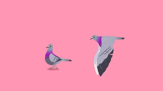 Pigeon Cycles
