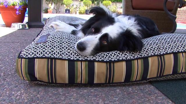 Indoor Outdoor Dog Bed Large