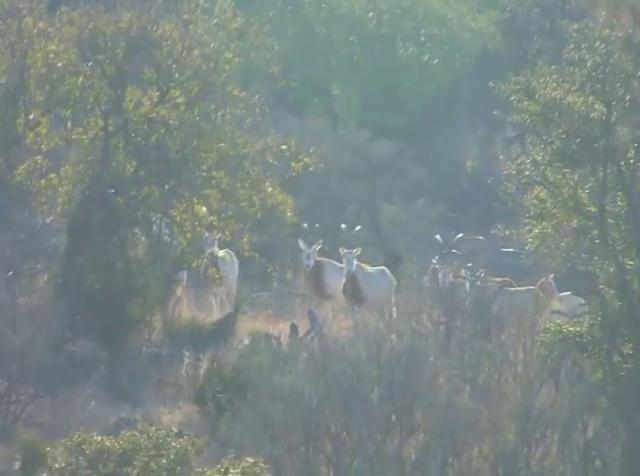 Episode 9 Hunting exotics with Selah Springs Ranch