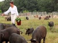 &quot;The Whole Hog Cookbook Film&quot;