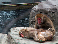 Insider's Guide to Central Park Zoo