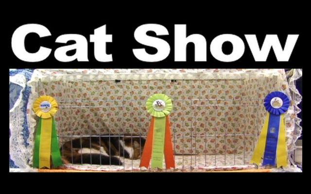 cat show wallpaper