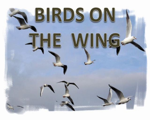 Birds On The Wing