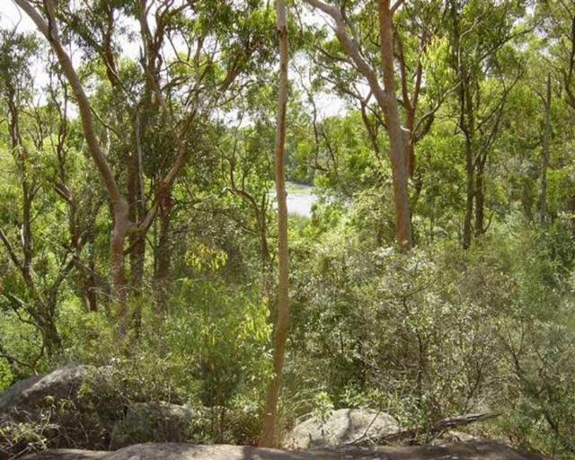 G'day from Lane Cove National Park, Sydney, Australia