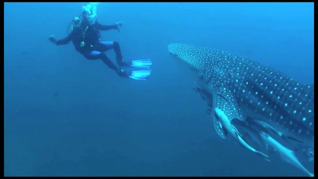 An Ode to the Sea - Fish of Daimaniyat Islands