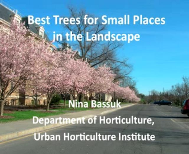 Best trees for small spaces in the landscape on vimeo for Trees for small spaces