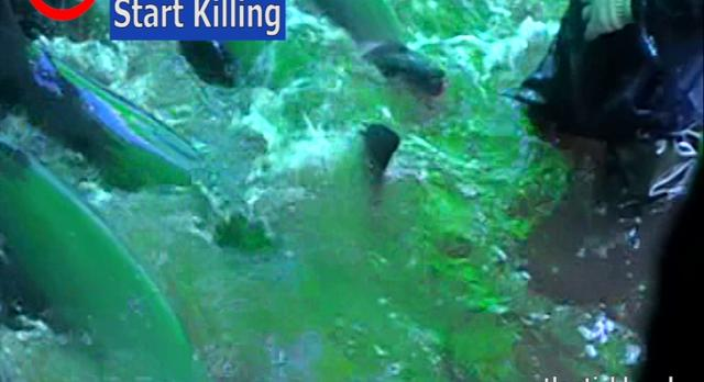 Killing Dolphins at Taiji is Slow and Cruel