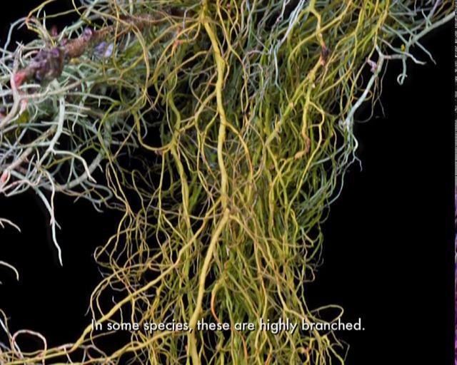 Lichen Diversity