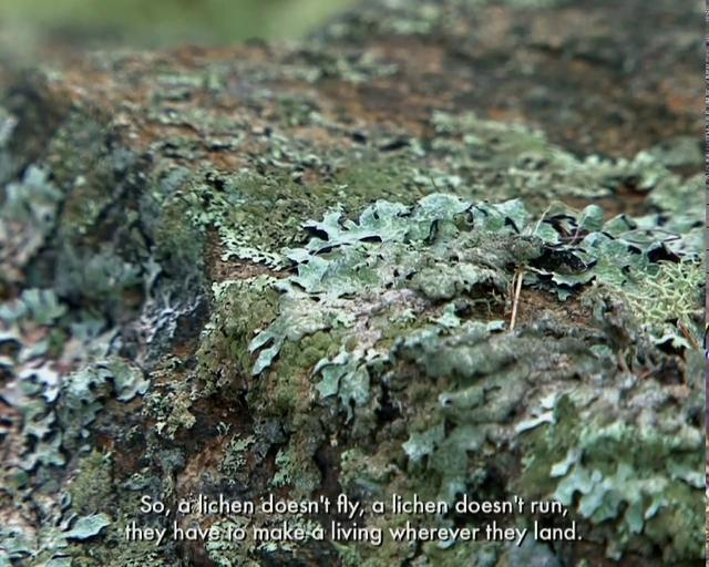 Studying Lichens with Mycologist Anne Pringle