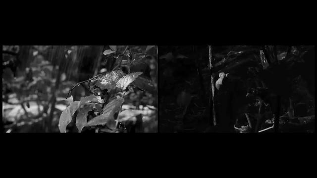 Que voz feio (醜い声) , 2011