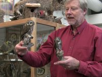 Bob Boekelheide on the owl prowl