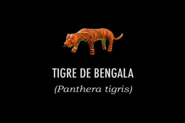 Video tigre de Bengala on Vimeo