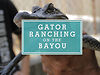 My Gulf: Gator Ranching on the Bayou