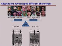 Genetic Variation in Behavior, Evolution and Disease - Mitali Mukerji, Institute of Genomics and Integrative Biology