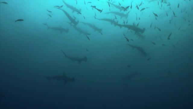 Galapagos Diving 2011