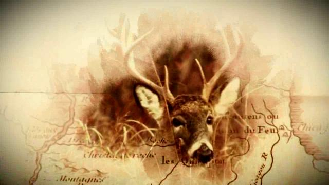 Conservation Minute: Illinois Whitetail