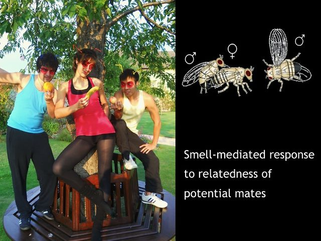 Dance your PhD 2011: Smell mediated response to relatedness of potential mates