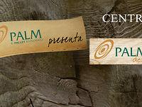 Palm Design 2011