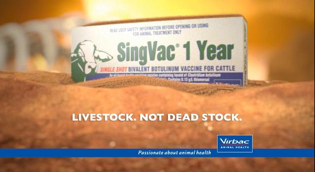 SingVac - 1 Year