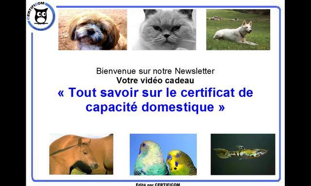 Vid O Bonus Newsletter Tout Savoir Sur Le Certificat De Capacit Domestique On Vimeo