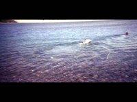 Paw Paddle - LomoKino (00:24)