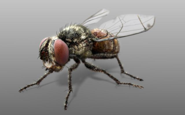 """""""Fly"""" - Blender Modeling Timelapse"""