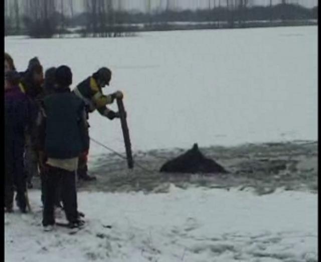 Paard vast in ijs