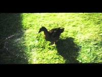 Patrick and his Animals [LomoKino Movie] (00:14)