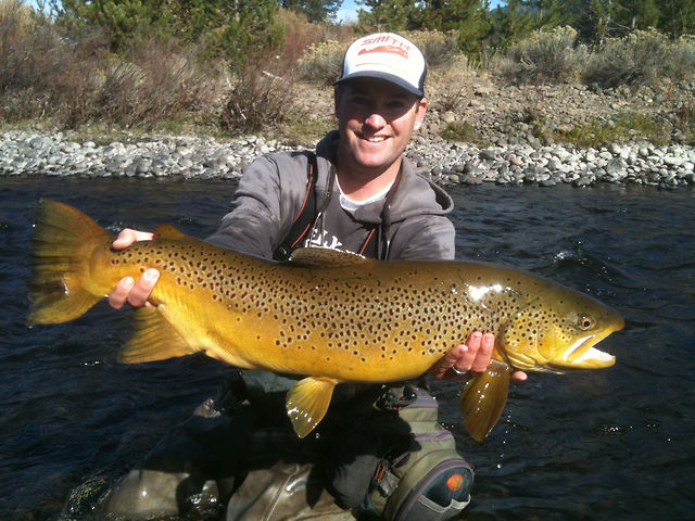 Matt Heron Reels in a Gigantic Brown Trout