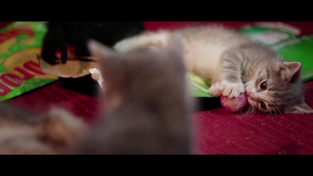 Day 6 - Kittens!