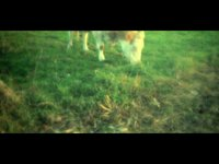 The cow (00:30)