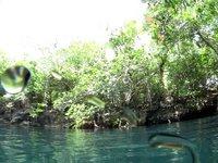 Cenote Angelita  (Messico)